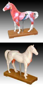 Acupuncture Horse Model -Free shipping