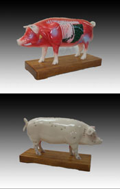 Acupuncture Pig Model
