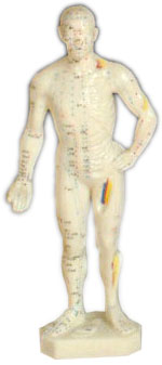 Acupuncture Human Body Model 10' /26cm