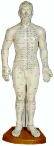 Acupuncture Human Body Model - Male 50cm